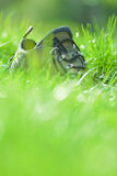 Shoe in grass Royalty Free Stock Photos