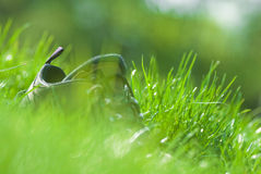 Shoe in grass Royalty Free Stock Photo