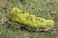 Shoe invaded by mosses, lichens and vegetation. Close-up Royalty Free Stock Image