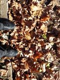 Shoe and leaf in autumn Stock Photos