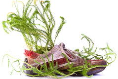 Shoe with lycopodium Stock Photography