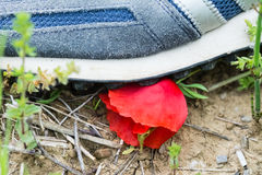 A shoe of a man destroy a poppy flower. In a field royalty free stock photos