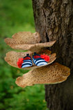 The shoe of the newborn on a large mushroom. On a tree Stock Image
