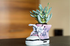 Shoe pot with green cactus flower. Pink Shoe pot with green cactus flower royalty free stock images