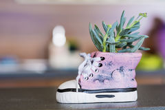 Shoe pot  with green cactus  flower Royalty Free Stock Image