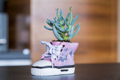 Shoe pot  with green cactus  flower Stock Photo