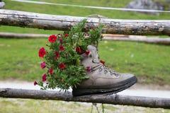 Shoe. Pot in the small green garden Stock Photography