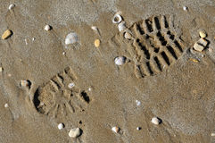 Shoe print in the sand Royalty Free Stock Photo