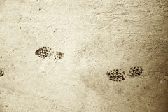 Shoe Prints in Dry Mud. High contrast shot of two shoe prints in a dry mud path Stock Images