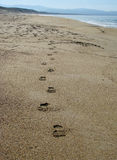 Shoe prints in sand Stock Images
