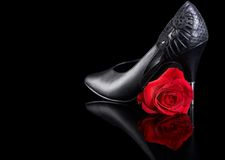 Shoe and rose Stock Photos