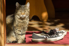 Сat and shoe on the threshold of house. Cat sitting near the shoe on the threshold of house sunny weather Stock Photo