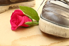 Shoe trample rose Royalty Free Stock Photo