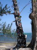 Shoe tree. A dead tree covered in a shocking assortment of shoes, sandals, trainers and flip flops washed up on the beach. Taken in Grand Cayman, Caribbean.  An Stock Photos