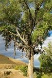 Shoe Tree Stock Photo