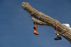 Shoe tree. Tree limb festooned with discarded shoes Royalty Free Stock Images
