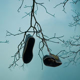 Shoe-Tree Royalty Free Stock Photography