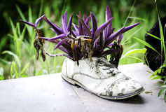 Shoe Tree Royalty Free Stock Image