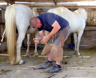 Farrier shoeing a white horse stock photo