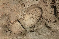 Shoeprint in mud Stock Image