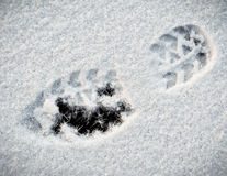 Shoeprint in snow. On ice stock photography