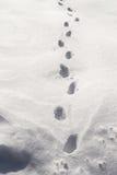 Shoeprints dans la neige Photographie stock