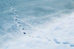 Shoeprints dans la neige fraîche sur le lac congelé Photographie stock libre de droits