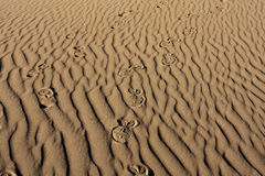 Shoeprints en arena ondulada Imágenes de archivo libres de regalías