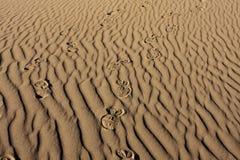 Shoeprints en sable ondulé Images libres de droits