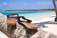 Shoes. On the palm tree of Bavaro beach stock image