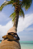 Shoes. On the palm tree of Bavaro beach royalty free stock photos
