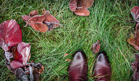 Shoes and autumn leaves covered with frost on grass Stock Photography