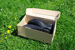 Shoes in the box Royalty Free Stock Photo