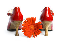 Shoes on high heel-stiletto  and a  flower Stock Images
