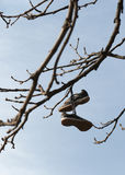 Shoes hung from a tree Stock Photos