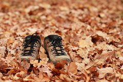 Shoes on lieves. Brown shoes with black shoelaces standing alone on the brown dead oak leaves stock photos