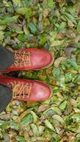 Shoes for man stock photography