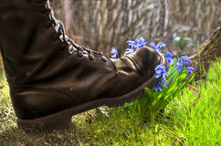 Shoes ruthlessly tramples flower royalty free stock images