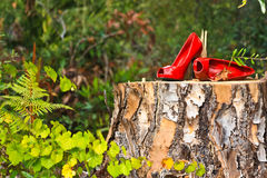 Shoes on a stump. Bright red leather shoes on a tree stump in the woods Royalty Free Stock Image