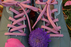 Shoes. Womens  pink laces Royalty Free Stock Image