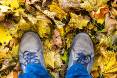 Shoes in yellow leafs from above Royalty Free Stock Photos
