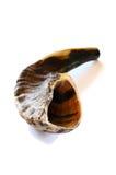 Shofar (cuerno) aislado en blanco símbolo tradicional judío Imagen de archivo libre de regalías