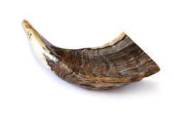 Shofar (horn). Rosh hashanah (jewish New Year) traditional symbo Royalty Free Stock Photography