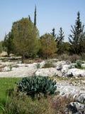 Shoham森林公园2011年1月 免版税库存图片
