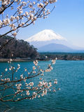 Shoji Lake, Mount Fuji, cherry blossom, Japan. Scenery of Shoji Lake in bright blue with snowcap of Mount Fuji (Fujisan) in background and cherry blossom on royalty free stock photos