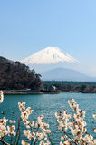 Shoji Lake, Mount Fuji, cherry blossom, Japan Stock Photo