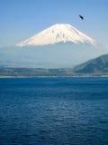 Shoji Lake, Mount Fuji, flying bird, Japan stock photography