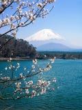Shoji Lake, zet Fuji, kersenbloesem, Japan op Royalty-vrije Stock Foto's