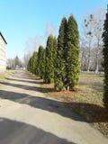 Shool park. Park near the school in the spring Stock Photo