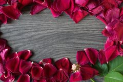 Shoot from above of a withered rose and petals making a circle a stock photography